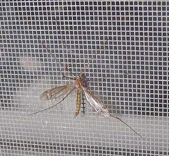комарник
