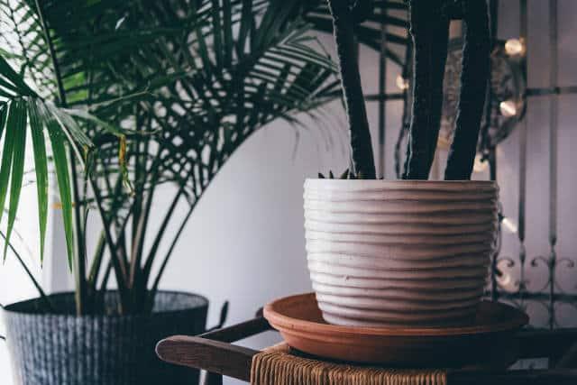 растения в дневната